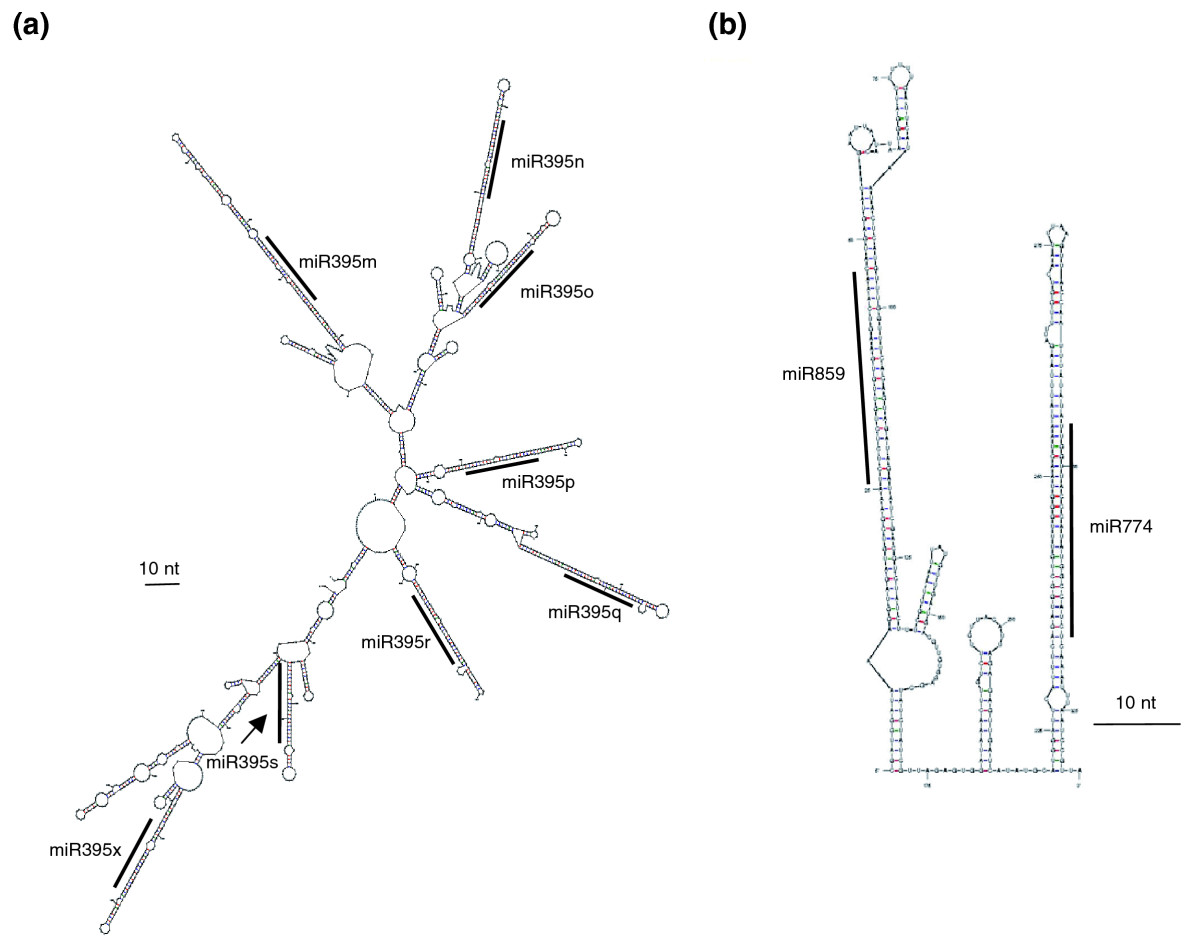 https://static-content.springer.com/image/art%3A10.1186%2Fgb-2009-10-12-r136/MediaObjects/13059_2009_Article_2286_Fig2_HTML.jpg