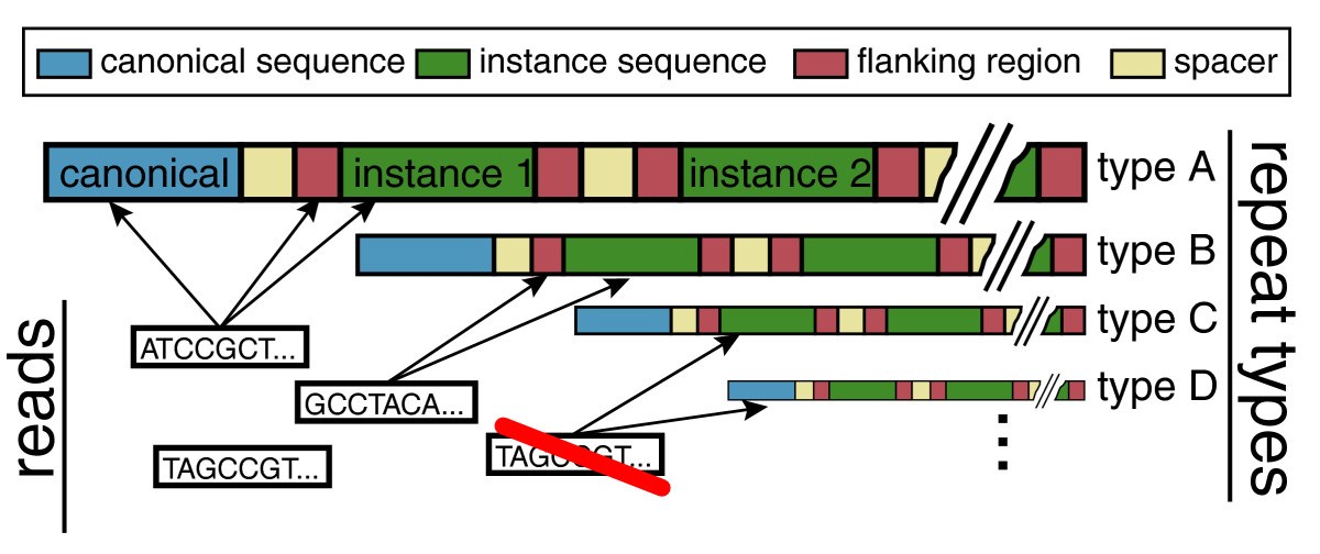 https://static-content.springer.com/image/art%3A10.1186%2Fgb-2010-11-6-r69/MediaObjects/13059_2010_Article_2362_Fig1_HTML.jpg