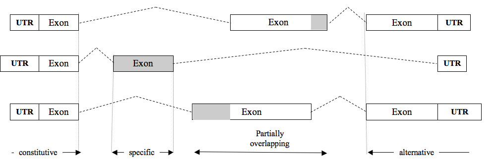 https://static-content.springer.com/image/art%3A10.1186%2Fgb-2011-12-1-r9/MediaObjects/13059_2010_Article_2476_Fig1_HTML.jpg
