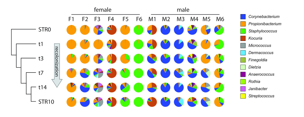 https://static-content.springer.com/image/art%3A10.1186%2Fgb-2012-13-11-r101/MediaObjects/13059_2012_Article_2977_Fig6_HTML.jpg