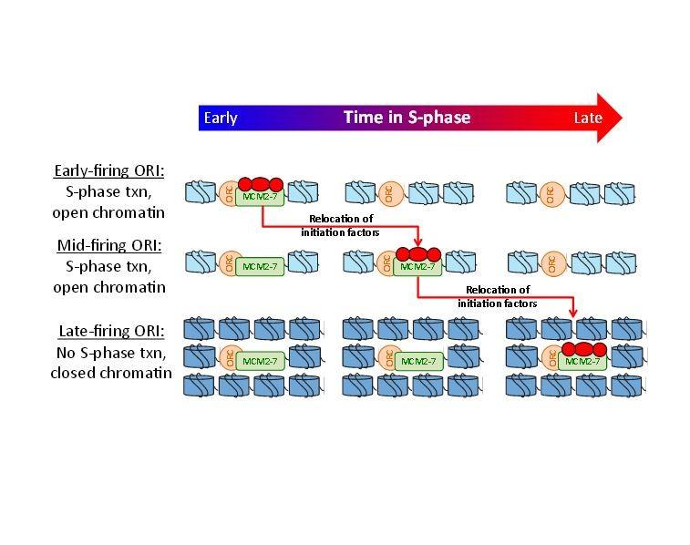 https://static-content.springer.com/image/art%3A10.1186%2Fgb-2013-14-10-r111/MediaObjects/13059_2013_3161_Fig5_HTML.jpg