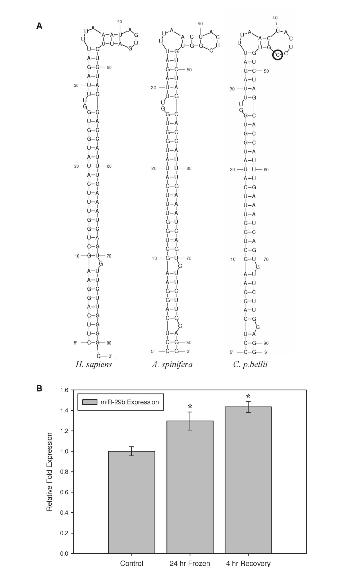 https://static-content.springer.com/image/art%3A10.1186%2Fgb-2013-14-3-r28/MediaObjects/13059_2012_Article_3061_Fig3_HTML.jpg