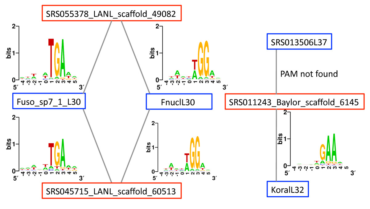 https://static-content.springer.com/image/art%3A10.1186%2Fgb-2013-14-4-r40/MediaObjects/13059_2013_Article_3058_Fig5_HTML.jpg