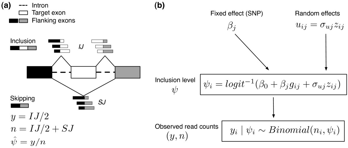 https://static-content.springer.com/image/art%3A10.1186%2Fgb-2013-14-7-r74/MediaObjects/13059_2013_Article_3131_Fig1_HTML.jpg