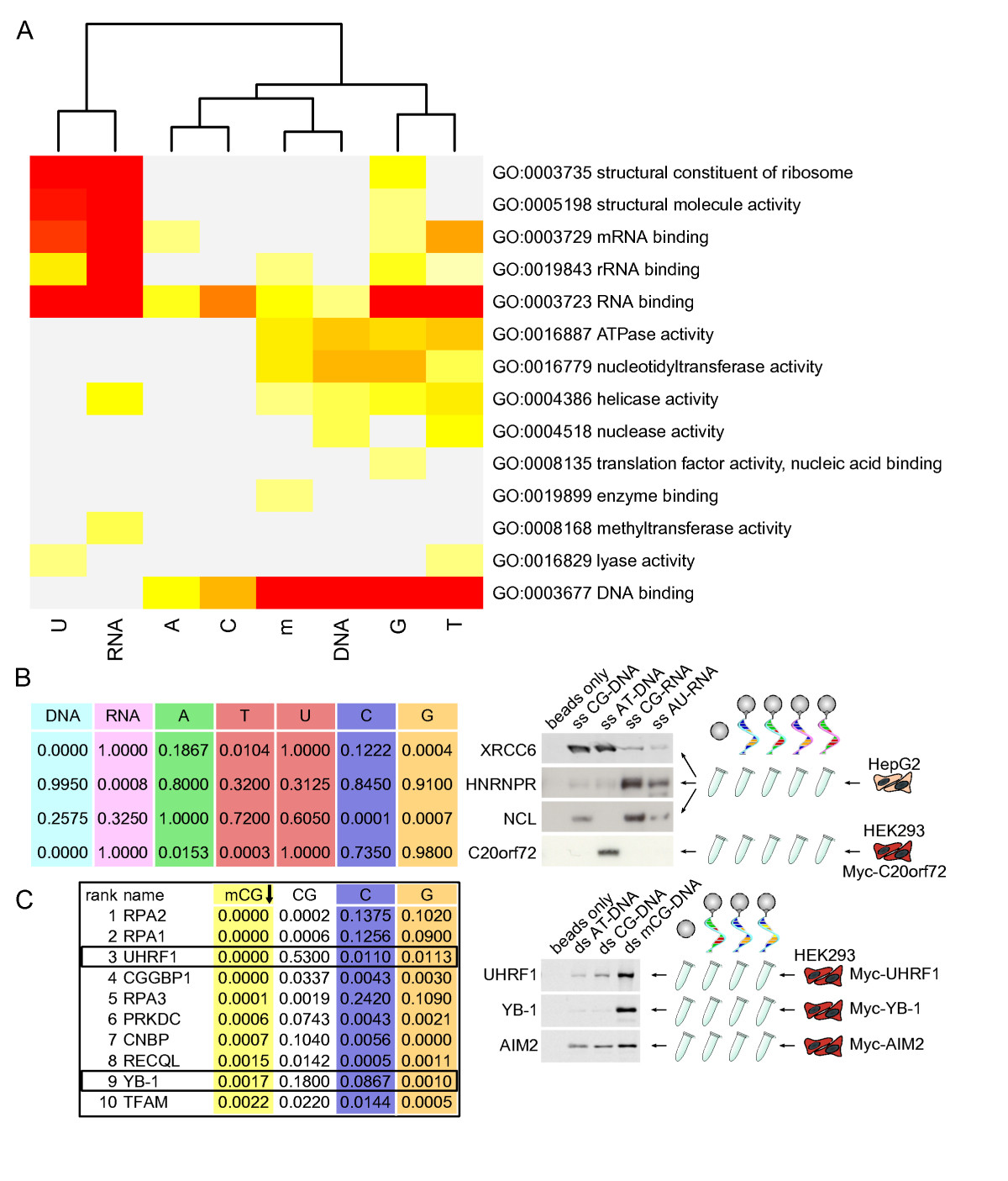 https://static-content.springer.com/image/art%3A10.1186%2Fgb-2013-14-7-r81/MediaObjects/13059_2013_Article_3125_Fig4_HTML.jpg