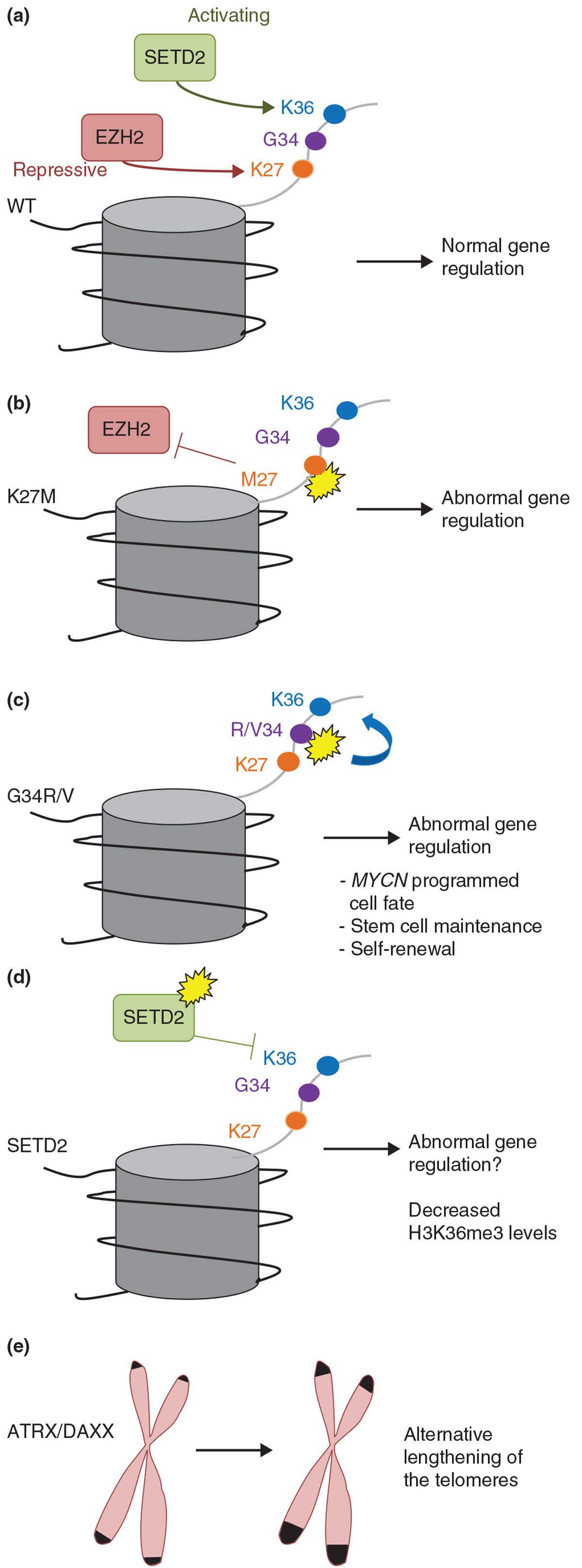 https://static-content.springer.com/image/art%3A10.1186%2Fgm470/MediaObjects/13073_2013_Article_457_Fig2_HTML.jpg