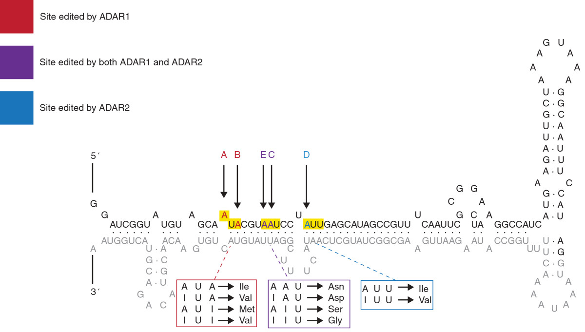 https://static-content.springer.com/image/art%3A10.1186%2Fgm508/MediaObjects/13073_2013_Article_496_Fig3_HTML.jpg