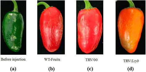https://static-content.springer.com/image/art%3A10.1186%2Fs12870-014-0314-3/MediaObjects/12870_2014_Article_314_Fig3_HTML.jpg