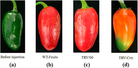 https://static-content.springer.com/image/art%3A10.1186%2Fs12870-014-0314-3/MediaObjects/12870_2014_Article_314_Fig4_HTML.jpg