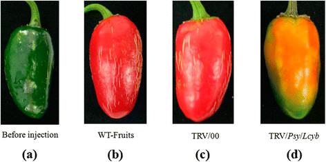 https://static-content.springer.com/image/art%3A10.1186%2Fs12870-014-0314-3/MediaObjects/12870_2014_Article_314_Fig5_HTML.jpg