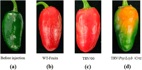 https://static-content.springer.com/image/art%3A10.1186%2Fs12870-014-0314-3/MediaObjects/12870_2014_Article_314_Fig6_HTML.jpg
